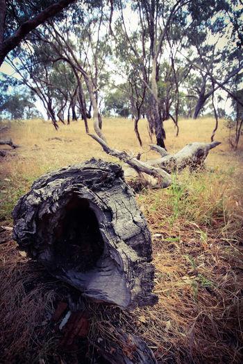 Tree Sky Landscape Grass Dead Tree Fallen Tree Branch Tree Trunk Woods Treelined