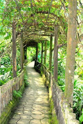 The Green Walkway Day Diminishing Perspective Empty Footpath Green Growth Long Lush Foliage Narrow Nature No People Outdoors Park Path Pathway Plant The Way Forward Tranquil Scene Tree Tree Tree Trunk Trees Trellis Vanishing Point Walkway