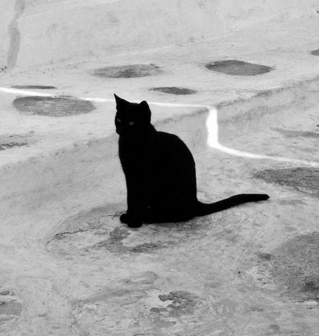 Cat BLackCat Blackandwhite Black & White Blackandwhite Photography Domestic Cat Animal Themes