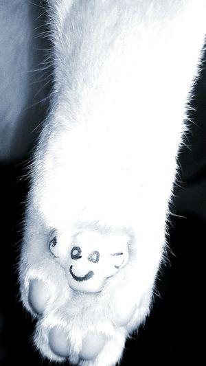 HappyCat Happiness ~ Very Nice 😚 😚 😚 Pet Mycat Easter Ready