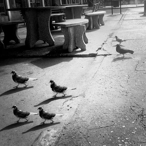 Black & White Birds Monochrome