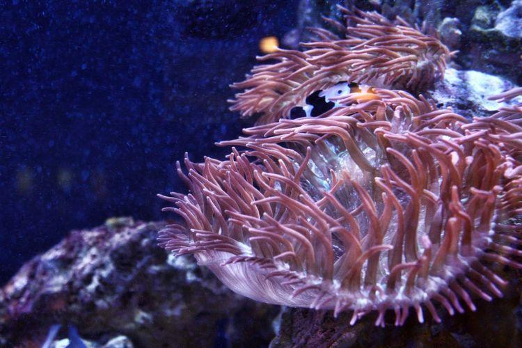 sea life Animal