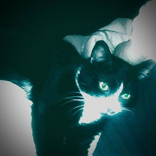 Our Cat Oreo. Catsofinstagram Followme Like4like Cat Catselfie Cats_of_instagram Feline