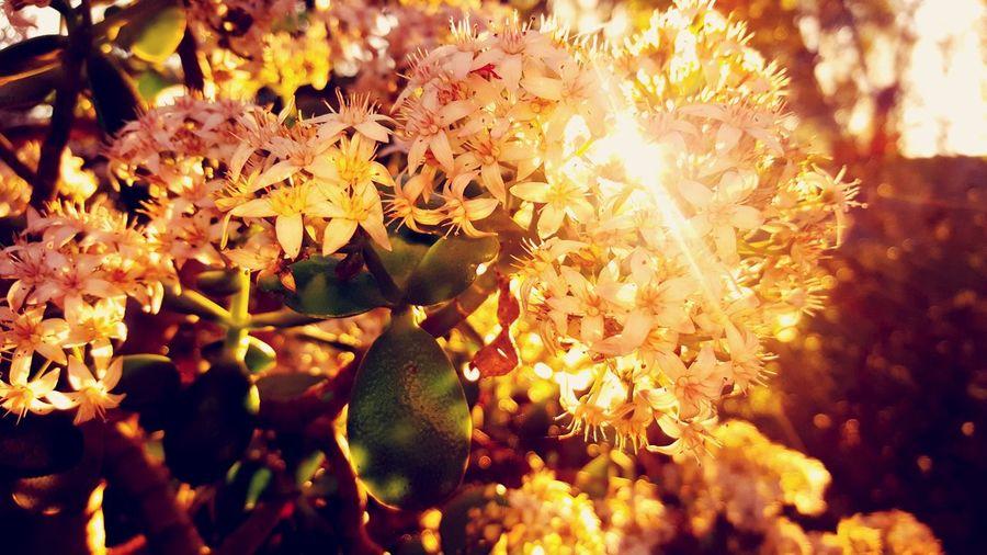 EyeEm Best Shots - Nature Sunlight Nature Flower Head Plant Beauty In Nature
