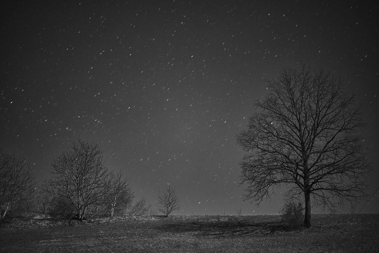 Tree Scenics - Nature Night Field Plant Sky Bare Tree Beauty In Nature Land Tranquil Scene Landscape Tranquility No People Star - Space Space Environment Nature Astronomy Cold Temperature Non-urban Scene Outdoors Snowing Black And White Startrails Eyem First Photo First Eyem Photo