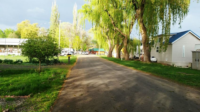 Walking Around at Willams Lake Washington takeing random shot of the Willow Trees Iart Nature Photography Taking Photos Nature_collection Eye4photography  EyeEm Nature Lover hope you like the shpt and thanks for checkin it out Adam O The Essence Of Summer