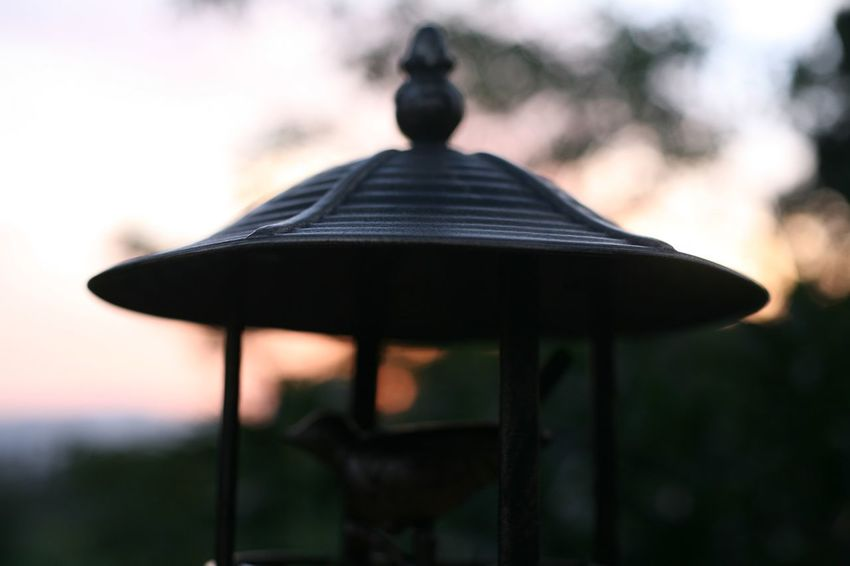 🕊🌳🦎 Garden Photography Garden Nature Focus On Foreground No People Outdoors Close-up Silhouette Nature Day Wood - Material Bird Music Shape Design Metal Musical Instrument Park Sky Roof Table Relaxation Lighting Equipment