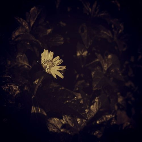 Naturelovers Nature Nature Photography Naturelover Nature_collection Nature Is Art Tiny Flower Tiny World Vintage Filter