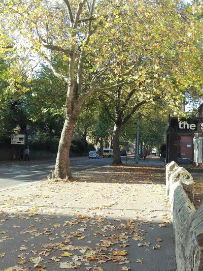 Autumn Trees Taking Photos My City Derby London Rd Derby Fall Beauty For The Love Of Trees ~