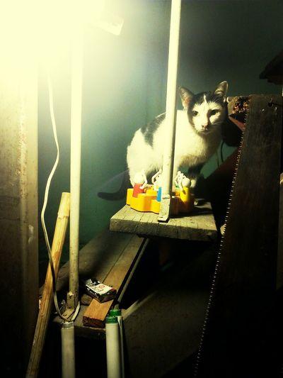 แมว First Eyeem Photo