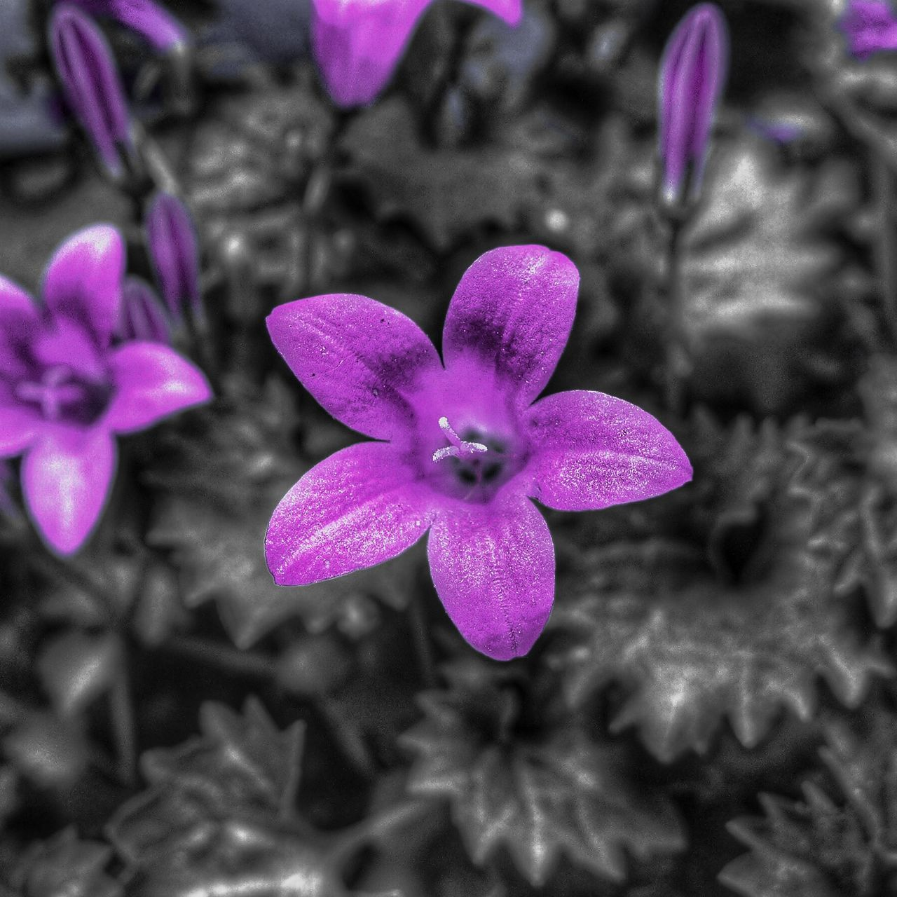 flower, petal, purple, fragility, beauty in nature, nature, no people, freshness, plant, day, flower head, close-up, growth, pink color, outdoors, blooming, periwinkle