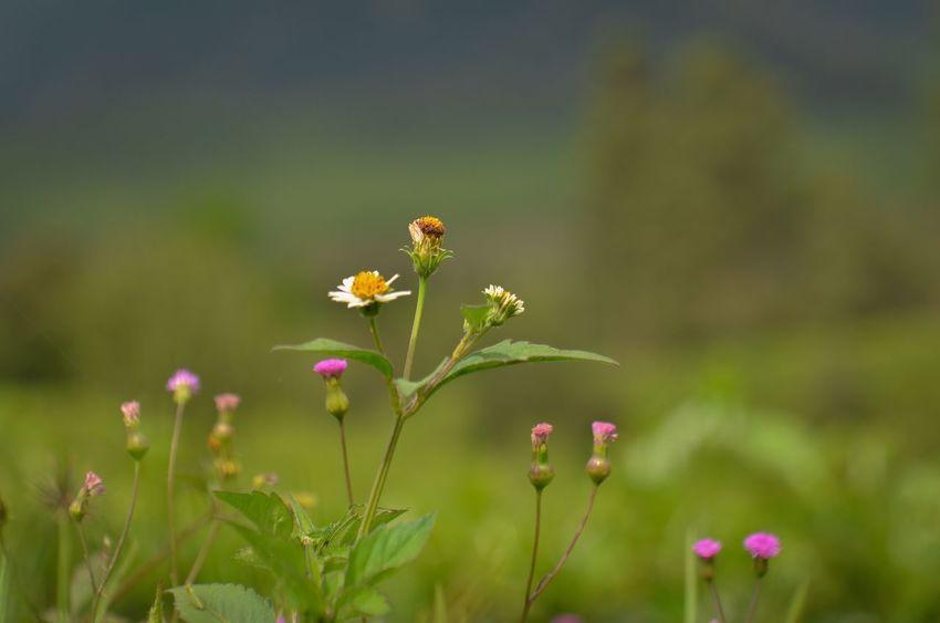 Flower Flowers Nature Minolta Minolta50mmf2 Taking Photos Enjoying Life