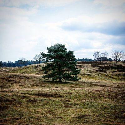 Baum Heide Westruperheide Haltern Halternamsee Herbst Autumn Ig_nrw