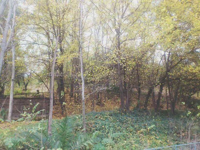 Paradisetravel Travelb Bosquetree Trees