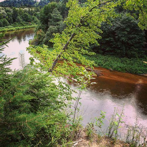 GaujaRiver Wood Nature First Eyeem Photo