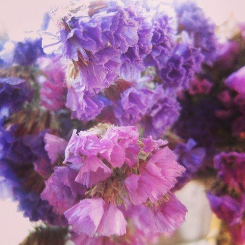 Purple Flowers Tweegram Instamood instagood instahub jj igers igersturkey jj_forum igdaily instadaily instacolor ig_turkey igturko igaddict igersga igfotogram galaxycamera galaxys3 all_shots picstitch like4like instapeople statigram master_pics