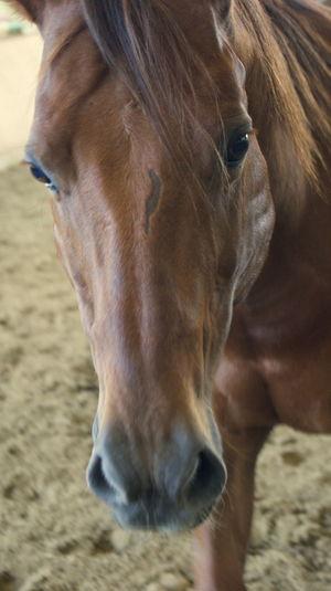 Portrait Horse Nature Pferd