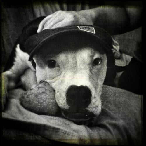 puppy, blackandwhite