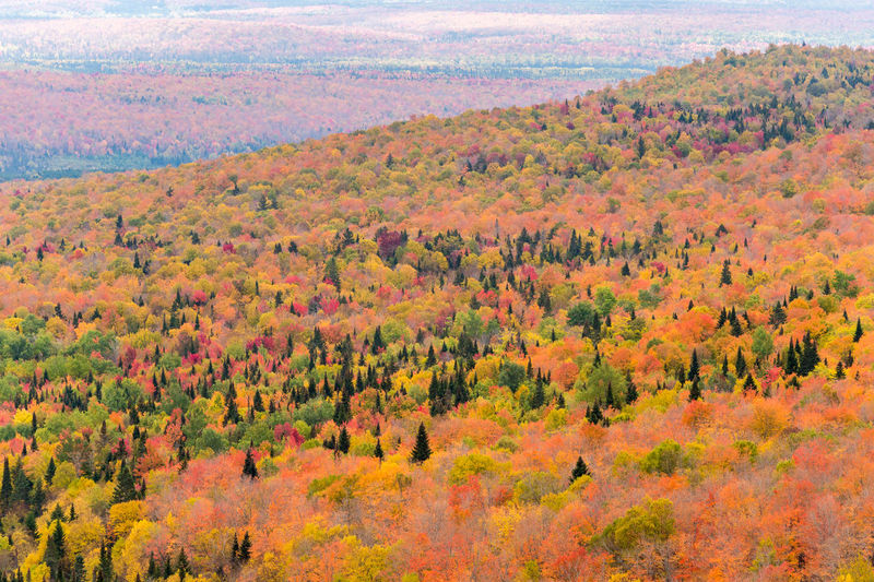 Aerial view of trees on in forest during autumn
