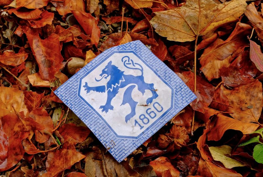 Autumn Leaf Blue Communication High Angle View Close-up Pattern Text Leaves No People Falling Outdoors