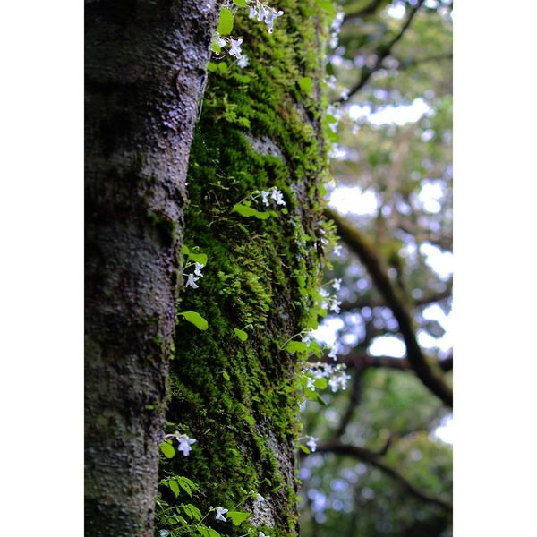 Tree Tree Trunk Growth Nature Day Low Angle View No People Vegetation Outdoors Green Color Beauty In Nature Close-up Ivy Sky