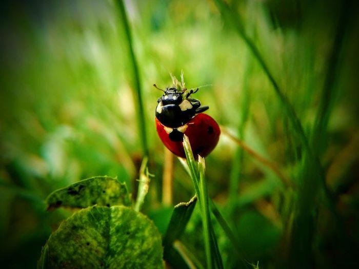 Ladybug...