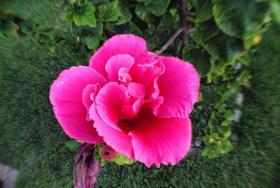 Ser duplamente flor, encanta, colore e faz bem.. Beauty In Nature Blooming Close-up Day Flower Flower Head Fragility Freshness Growth Nature Outdoors Petal Pink Color Plant