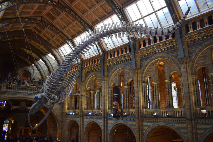 The huge dinosaur skeleton in the main hall of National History Museum really gets you Architecture Arch Built Structure Travel Destinations Low Angle View Indoors  The Past History Travel Tourism City Ceiling No People Place Of Worship Architectural Column Belief Religion Building Sculpture Ornate Gothic Style London Natural History Museum Dinosaurs Bones Fossil Science Discovery Archeology Excavation Extinct Skeleton Europe Things To Do Impressive Awe Natural Light