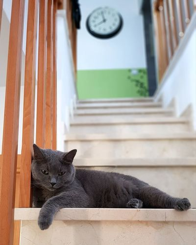 Portrait of cat resting on staircase