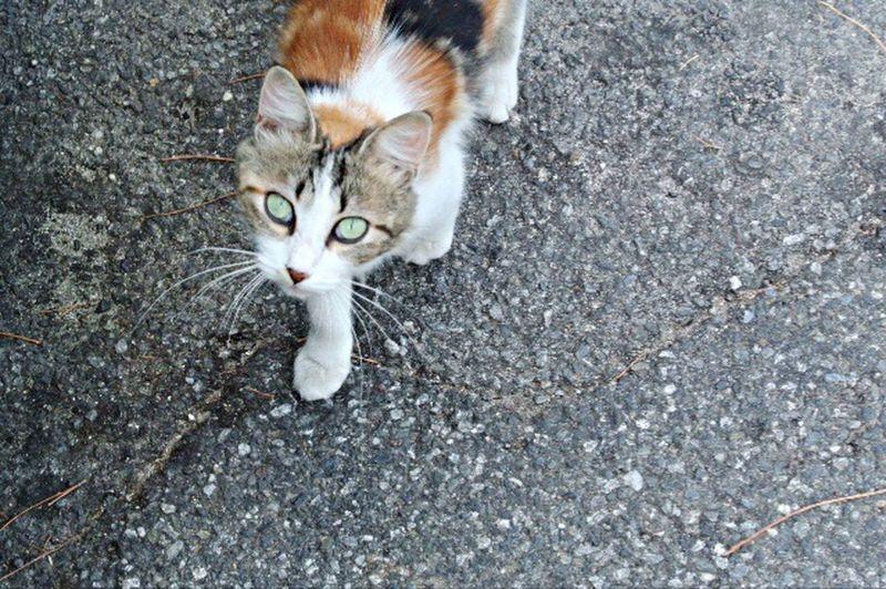 Portrait Street Cat Colorful Beauty
