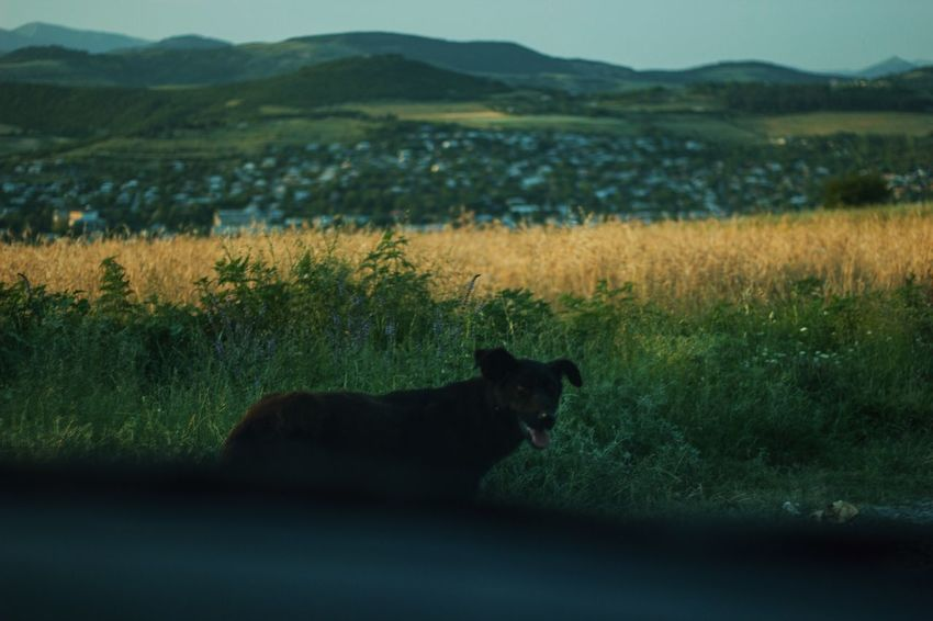 https://www.instagram.com/david_sarkisov_photography/ Animal Animal Themes Day Domestic Domestic Animals Environment Field Grass Land Landscape Mammal Mountain Nature No People One Animal Pets Plant Side View Transportation Vertebrate The Photojournalist - 2018 EyeEm Awards Summer Road Tripping