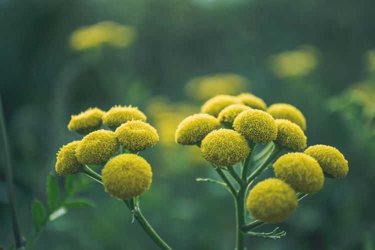 Growth Flower Plant Close-up Freshness Beauty In Nature Yellow Nature New Life Botany Springtime Blossom Flower Head Nature Photography Nature Nature_collection Wildlife Kerber Outdoors Beauty In Nature Maximum Closeness Macro_collection Macro Nature Macro Photography Macro Beauty