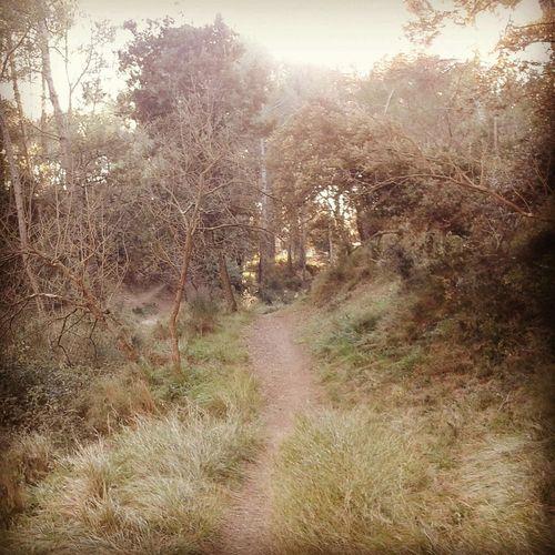 Hiking Trail Hiking Trail Villeneuve-lez-avignon