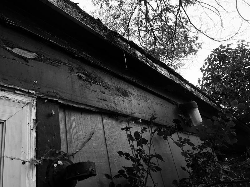 Low Angle View Built Structure Tree Architecture Building Exterior No People Day Outdoors Branch Ivy Nature Sky Abandoned Dark By Tisa Clark🌑🌌 Black & White By Tisa Clark