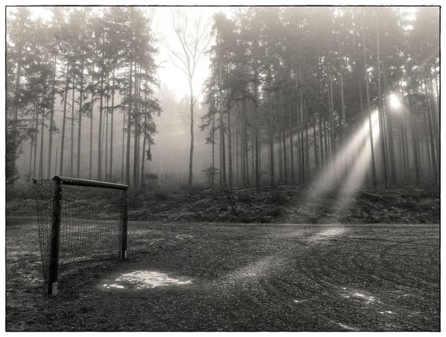 goal and light finger Beauty In Nature Blackandwhite Forest Goal Lawoe Light Fingers Nature No People Outdoors Tranquility Tree