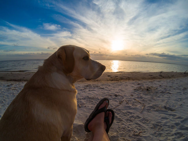 Dog sits next to a person's feet on a beach with a sunset in the background Beach Companion Companion Dog Dog Feet Flip Flops Labrador Sitting Sunset Watching