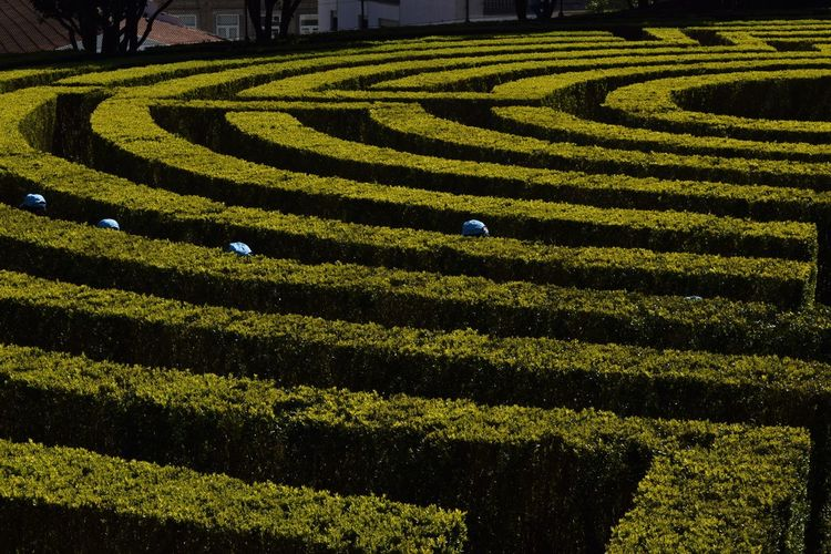 High Angle View Of Children Hiding In Hedge Maze At Formal Garden