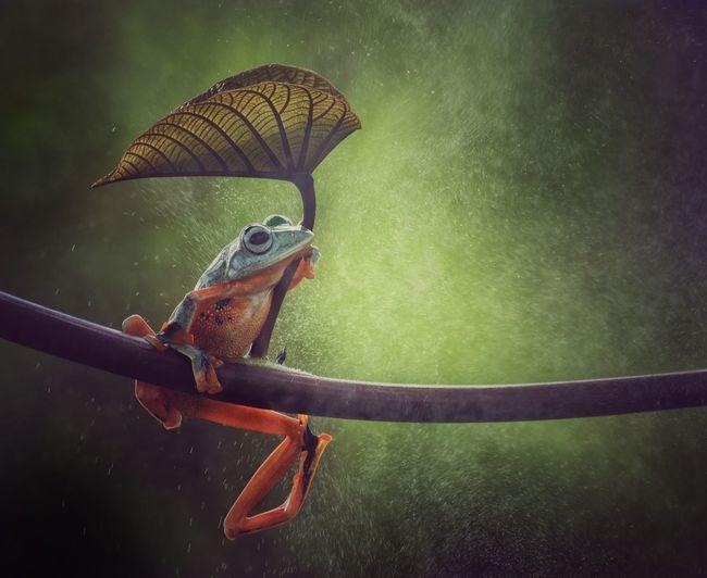 Tree frog in the hoop