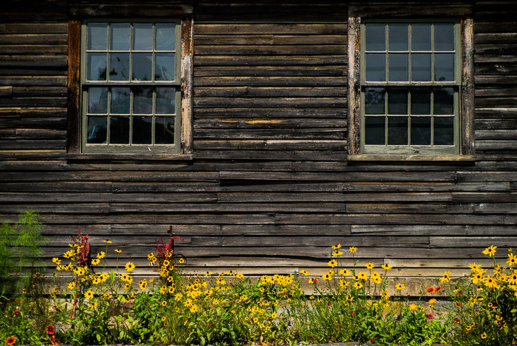 Brown Building Flowers No People Outdoors Windows Wood Yellow