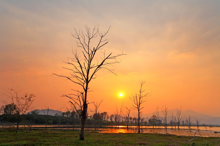Beautiful sunset of silhouette dead trees at the reservoir is great, very wide. Natural background Sunset Sky Beauty In Nature Scenics - Nature Orange Color Tranquility Tree Bare Tree Tranquil Scene Plant Sun No People Landscape Field Nature Non-urban Scene Idyllic Water Remote Land Outdoors Dead Tree Dead Clouds And Sky Silhouette Reservoir Reservoir Dam Bright Sunrise Wood WoodLand