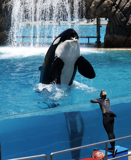 A6000 Animal Themes Aquatic Mammal Mammal One Animal One Person Sigma19mmArt Standing Water