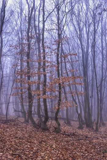 Fog Forest Nature_collection Nature EyeEmNewHere Eye4photography  EyeEm Gallery EyeEm Best Shots Hello World Landscape Eyem Gallery Wonderful Nature Wonderful View It Is Cold Outside Enjoy The Moment Enjoy The Nature I Enjoy The Nature Round Me I Enjoy The Peace Leaves Shades Of Winter This Is Queer