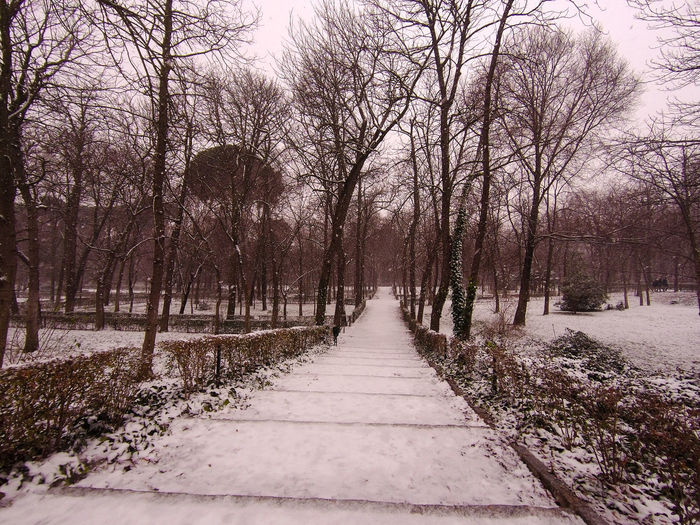 Footpath amidst trees during winter