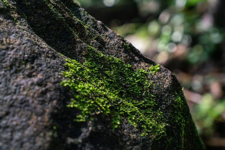 Green moss on