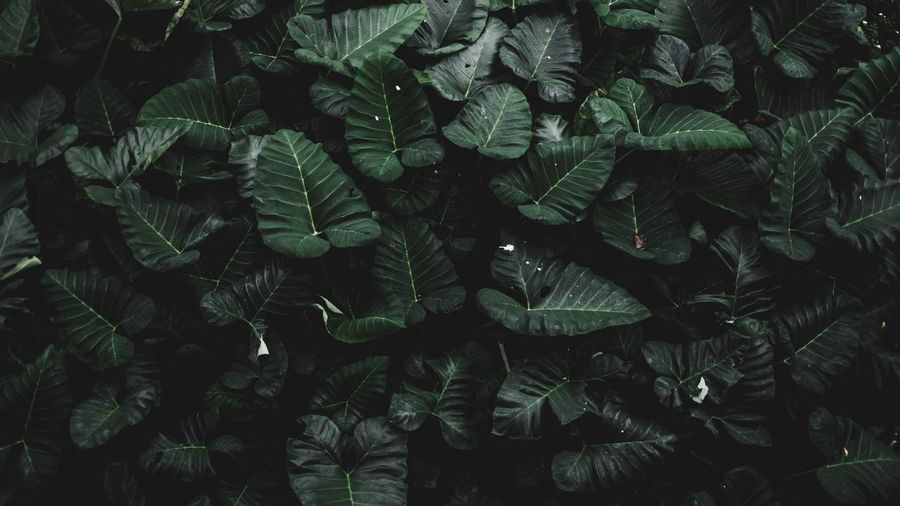 EyeEm Best Shots Top View Leaf Growth Plant Green Color Nature Full Frame Backgrounds Beauty In Nature No People Agriculture Outdoors Freshness Fern Day Plant Part Fragility Close-up Tea Crop EyeEmNewHere