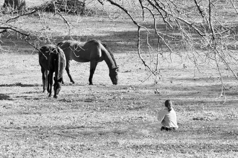 Horses Parc