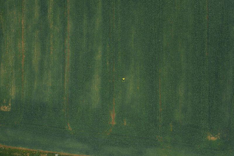 Full frame shot of green leaves on land