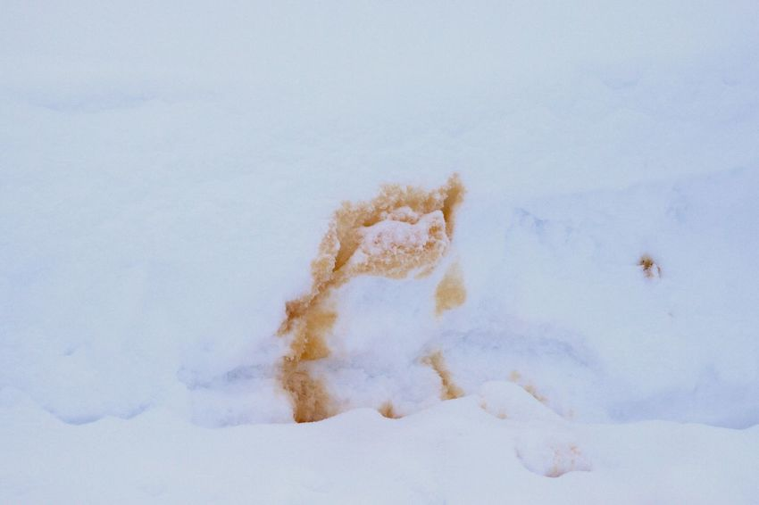 Yellowstone Warning!!! Don't eat the yellow snow!😝😝😝 Animal Urine EyeEm Selects Snow Winter Cold Temperature Nature White Color No People Land Close-up High Angle View Day Outdoors Directly Above