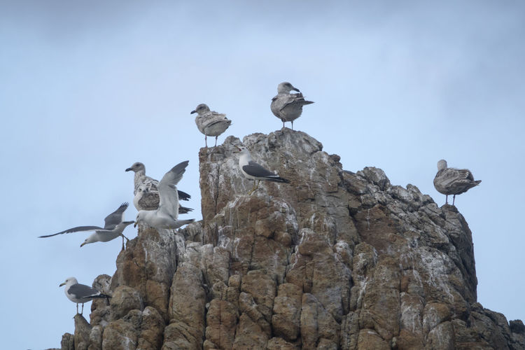 View of Janghohang, Samcheok, Gangwondo, South Korea Animal Themes Animals In The Wild Bird Day Janghohang Large Group Of Animals Living Organism No People Outdoors Perching Rock Rock - Object Sea Seagull Seaside Sky Togetherness