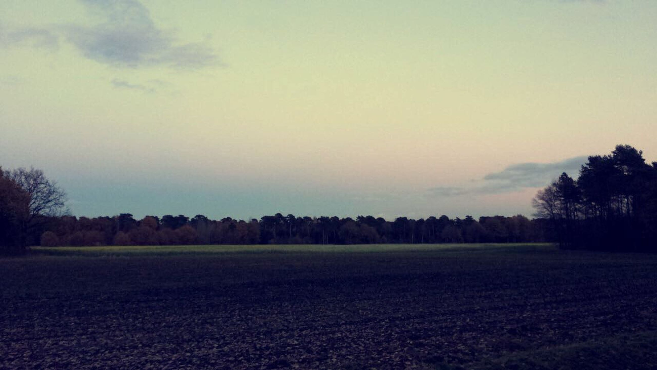 sky, tree, agriculture, landscape, nature, rural scene, tranquility, field, no people, growth, beauty in nature, tranquil scene, outdoors, scenics, day